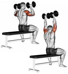 meilleurs exercices haltères